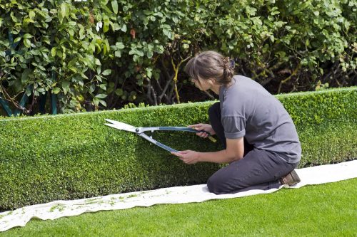 VA Lawn Care and Landscaping