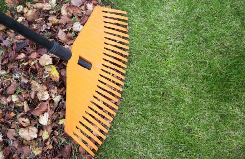 Leaf Removal Service in northern Virginia