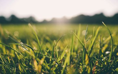 Master List of Different Types of Lawn Grass